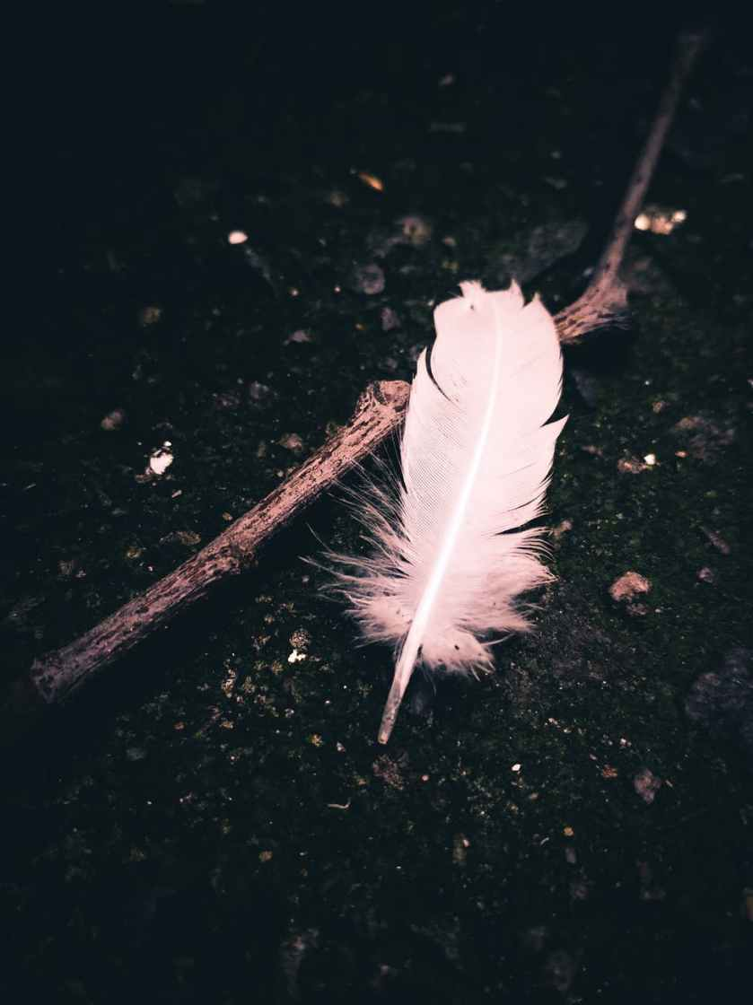 close up dark feather outdoors
